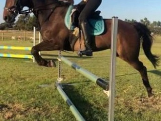 Willowmere Showtime competitive allrounder