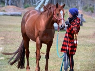 Sweet, Kind Chestnut TB Gelding
