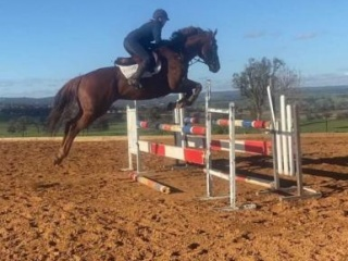 Showjumpers Dream