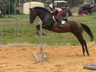All Rounder Mare
