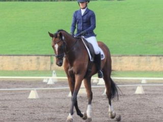 Eventing Schoolmaster *video added*