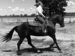Performance Friesian Warmblood 4yo Mare