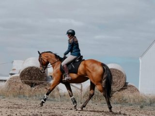 Blingy OTTB Bay Mare