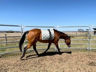 Ex Racehorses - Thoroughbred in Victoria