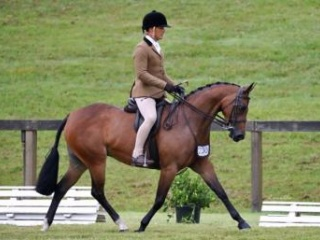 National Quality Show or Dressage