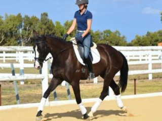 Eye Catching mare with exceptional bloodlines
