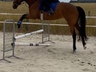 Talented, honest jumper, all rounder mare.