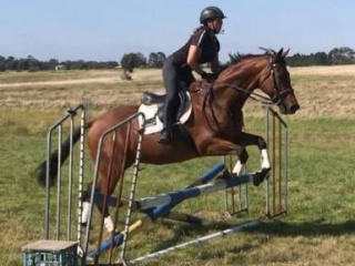 Lovely nature and straight forward gelding