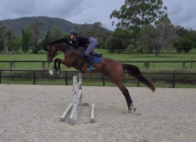 Talented, sound, scopey TB - SOLD pending trial