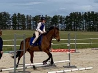 Talented jumper, all rounder performance mare.