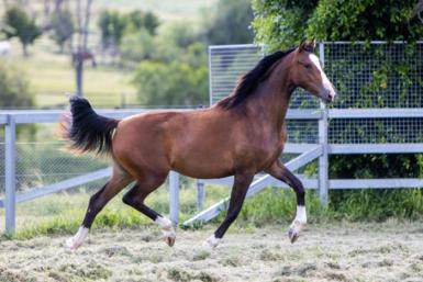 Outstanding Filly by Deniro for sale
