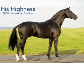 Quality His Highness/Furst Romancier Filly