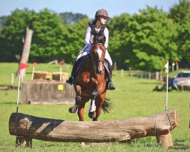 Ultimate All Rounder Mare