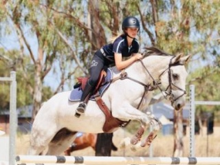 Sweet Warmblood Allrounder