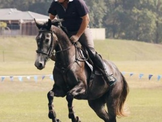Stunning Charlemagne Mare