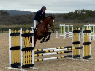 Athletic young mare with unlimited potential!
