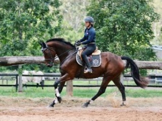 Broodmare/project. Clinton lines.