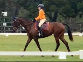 Lovely All Rounder Mare