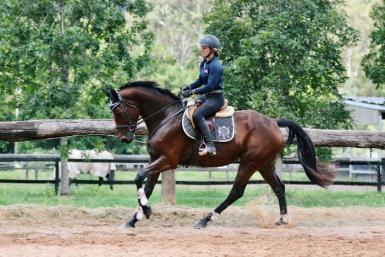 Broodmare/project. Clinton lines. SOLD pending