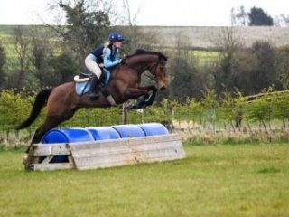 Strong 8yo Thoroughbred Gelding