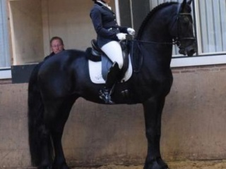 6 Years Old Stunning Charismatic Friesian Gelding