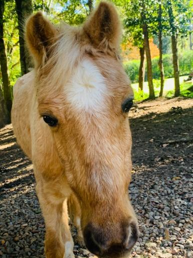 Paddock pony to good home only