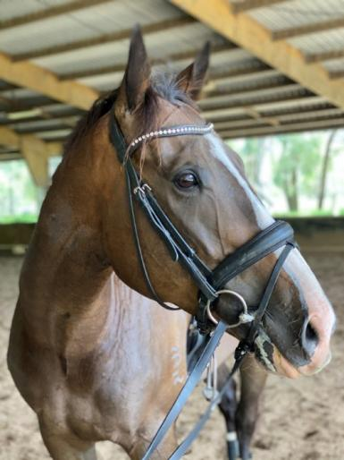 7yo 16.2hh TB Gelding with loads of potential!