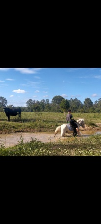First & Second Pony in Queensland