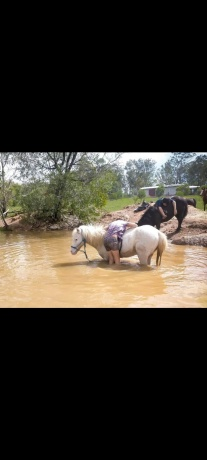 First & Second Pony - Palouse in Queensland