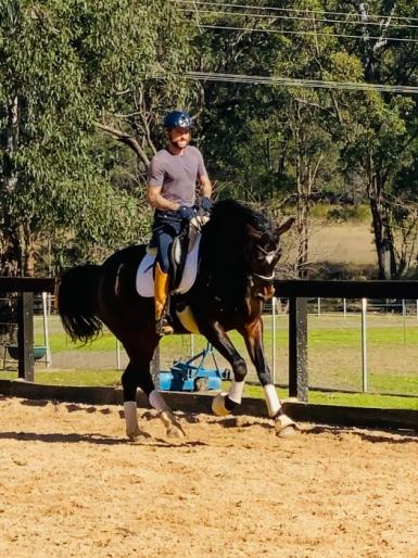 Dressage in New South Wales