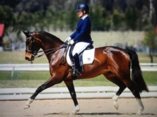 Beautiful Imported Mare