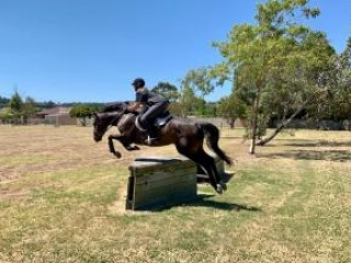 Great first Big Horse for sale
