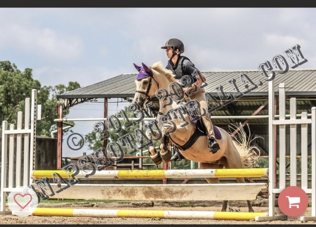 Eventers - Welsh Pony in New South Wales