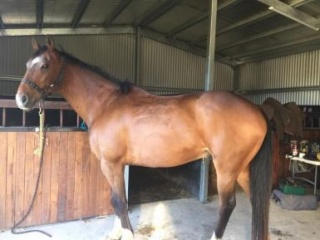 Sweet horse looking for Patient, Sensitive rider