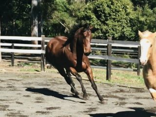 All Rounders - Thoroughbred in Queensland
