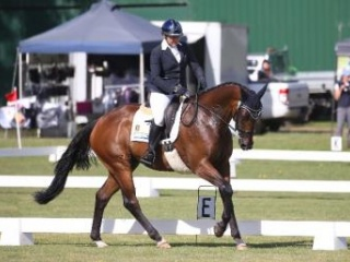 Lovely Talented Thoroughbred Gelding