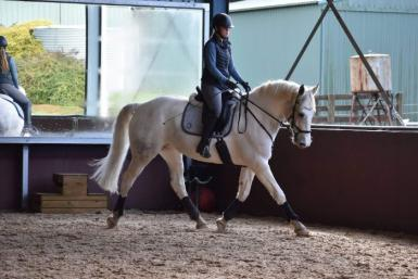 super sweet clydy cross coloured mare