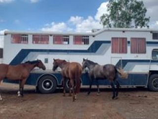 Comfortable, built to last, automatic horse truck