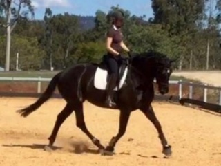 Beautiful Mare Offered to the Best of Homes Only