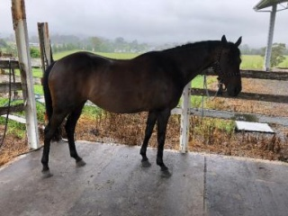 Sweet mare to breed with