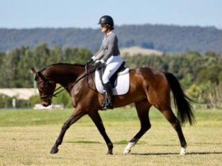 Lovely warmblood with lots of potential