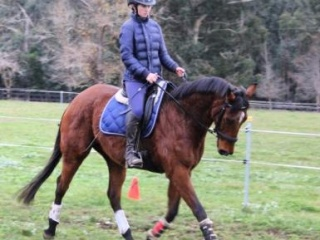 Quiet and Eye Catching Thoroughbred Mare