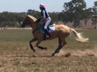 Potential Broodmare